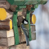 foto of tit  - tit on the wooden house close up - JPG