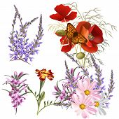 Vector Set Of Detailed Colored Flowers