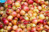 Cherries on sale in healthy concept