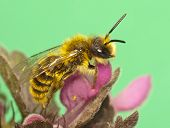 foto of bee keeping  - The bee sits on a flower - JPG