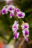 image of orquidea  - stock photo orchid colorful with pink purple white and green shade under the sunlight - JPG