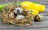 Quail Eggs With Tulips On Wooden Background