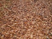 stock photo of bohemia  - layer of leaves in autumn southern Bohemia Czech Republic - JPG