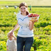Mother And Her Little Kid Child On Organic Strawberry Farm