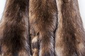 Skins of a sable for warm coat