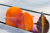 Autumn Leaves. Colorful Autumnal Leaves On The Wood Background. Soft Focus.