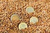 cereal grains of wheat. yields for crops in agriculture