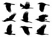 Birds In Flight - 9 Vector Illustrations