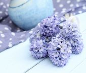 Blue, purple hyacinth