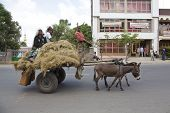 People Transports Hay With A Donkey
