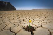 Yellow Flower Cracked Soil