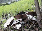 Mushrooms closeup