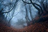 Autumn forest in Crimea