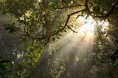 Beautiful Light Beam In The Rainforest