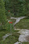 picture of nordic skiing  - Marked swedish ski trail in summer with rocks - JPG