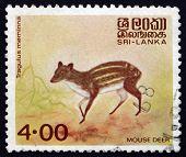 Postage Stamp Sri Lanka 1982 Mouse Deer