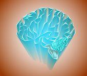 Labyrinths Of The Human Brain