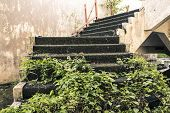Stone Stairway Filled With Grass