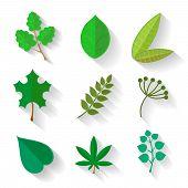 image of ash-tree  - Set of leaves of various trees - JPG
