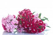 foto of carnation  - bright bouquet of carnations on a white background - JPG