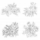 foto of cosmos flowers  - Set of cultivated flowers - JPG