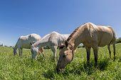 foto of herd horses  - Herd of horses - JPG