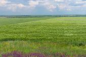 image of dnepropetrovsk  - Early summer landscape in central Ukraine near Dnepropetrovsk city - JPG