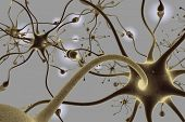 pic of neuron  - Neurons - JPG