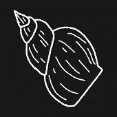 stock photo of beach shell art  - Shell Doodle - JPG