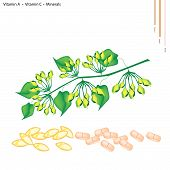 stock photo of creeper  - Healthcare Concept Green Cowslip Creeper or Telosma Minor Craib with Vitamin A Vitamin C and Minerals Tablet Essential Nutrient for Life - JPG