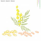image of cowslip  - Healthcare Concept Illustration of Yellow Sesbania Javanica with Vitamin A Vitamin C and Minerals Tablet Essential Nutrient for Life - JPG