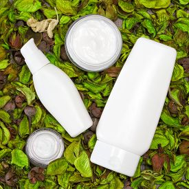 picture of cosmetic products  - Cosmetic skin care products surrounded by dry green leaves - JPG