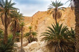 pic of sahara desert  - View of mountain oasis Chebika Sahara desert Tunisia Africa - JPG