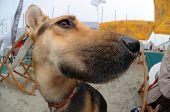 Dog Face Close Up Fisheye