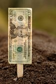 Planting Financial Growth