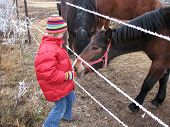 picture of feedlot  - Girl with red jacket feeding a horse - JPG