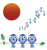 Постер, плакат: Птицы рассвет хор
