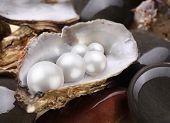 Perlas de placer en un shell en las piedras mojadas de la imagen.