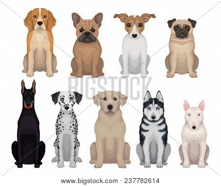 Colorful Set Of Dogs Of