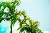 Coco Palm Tree Brght Toned Photo. Tropical Vacation Destination Place. Exotic Island Holiday. Tropic poster