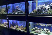 A Aquarium