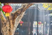 Chinese Lantern Hanging On A Tree With Sunbeam On A Tearoom In The Background poster