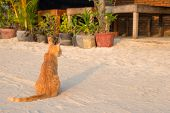 Orange Cat By Flower Pot. Tropical Island Sand Beach Scene. Vacation Travel With Pets. Stray Cat On  poster