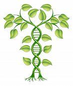 Conceito de planta de DNA
