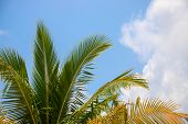 Coco Palm Tree Leaf On Sky Photo. Tropical Vacation Destination Place. Exotic Island Holiday. Tropic poster