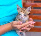 Little Cat In Womans Hands. Young Kitty With Red Fur And Blue Eyes. Caring Hands Holding Cute Kitte poster