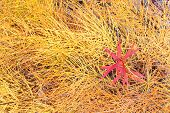 Fall colored horsetail and fireweed