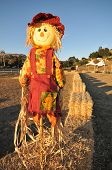 Scarecrow On A Pole In Bail Of Hay