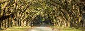 Oak tree lined road in Savannah, Georgia. poster