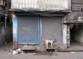 Cabra doméstica encadenado a la pared en la puerta de la tienda